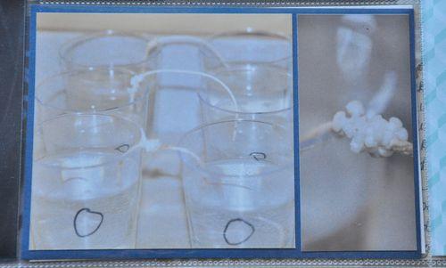 PL week 2 osmosis lab