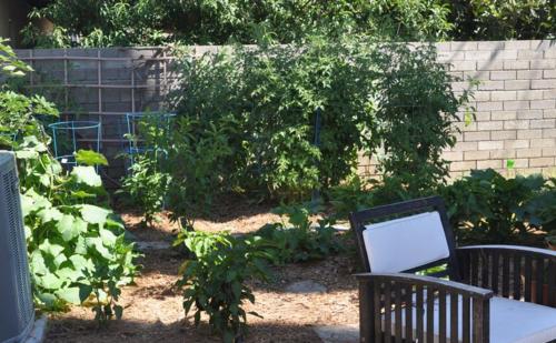 Garden july 2014 1
